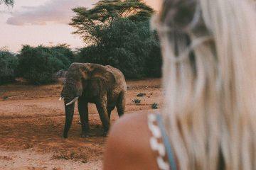 ЮАР, Замбия, Ботсвана, Новый Год, Sparkle Travel